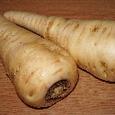 パースニップ( parsnip )