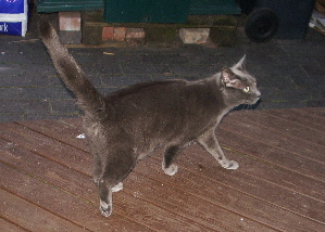 20070414thecat