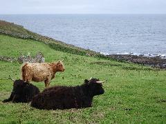 Cornwall_02